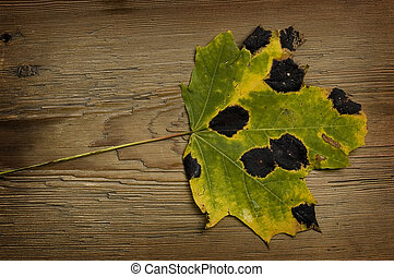 autumn leaf over old board