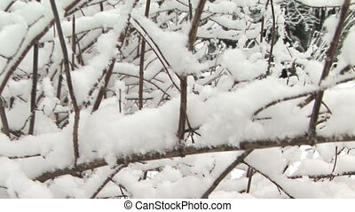 Snow in tree - Snow in barren tree, crane shot