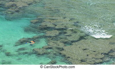 Snorkelers, Hawaii - Snorkelers at Hanauma Bay, marine life...