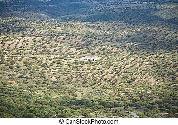 farm aerial view - farm at public monfrague natural park in...