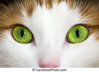 close up of a green cat eye