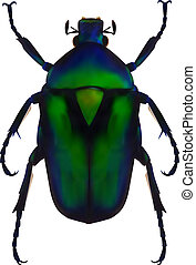 Flower chafer - An illustration of a green metallic beetle...