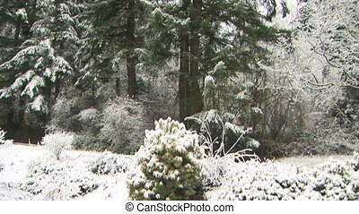 Snow Scene - Snow in the forest, crane shot