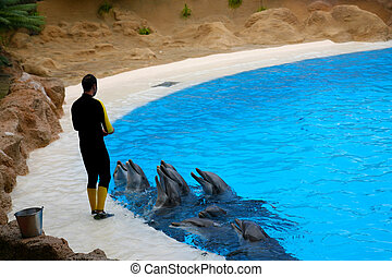 Feeding dolphins - Instructor is Feeding dolphins in...