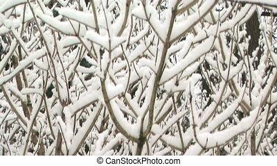 Snow in tree - Snow in barren tree, crane shot