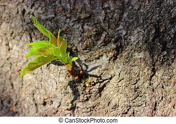bud cherry tree