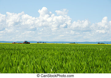 Rural life - Rural landscape, focus on red tractor, green...