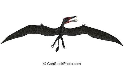 Dorygnathus Flight on White