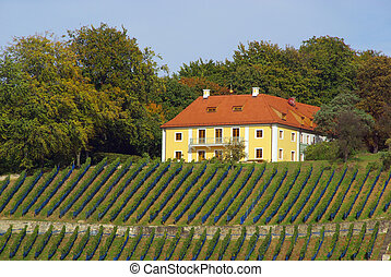 Dresden vineyard 07