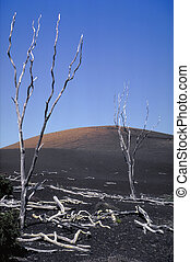 Hawaii - Desolate landscape on the slope of the volcano,...