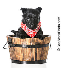 puppy in a bucket