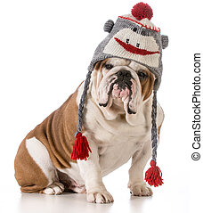 dog wearing hat - dog wearing winter hat