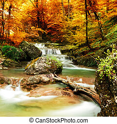 Autumn creek woods with yellow trees foliage and rocks in...