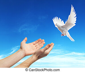hands released into the sky to the white dove