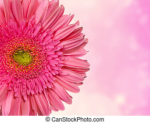 pink flower background - beauti pink flower background