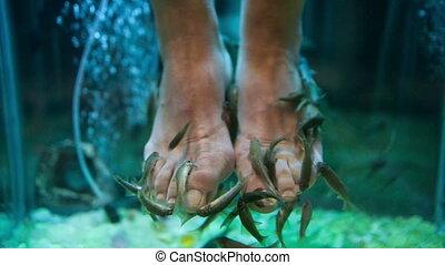 Garra Rufa fish pedicure - Close-up shot of female feet in...
