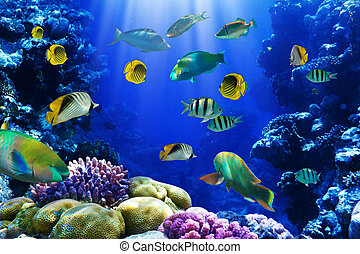 Coral reef - Photo of a coral colony on a reef, Egypt