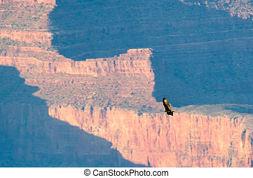 Bird flying over the grand canyon