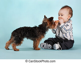 baby boy and dog - baby boy and yorkie dog, blue backgound
