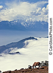 Site, sea of clouds waterfall scenery - Site, sea of clouds...