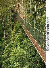 Tourist standing on canopy walkway, Taman Negara National...