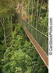 Tourist standing on canopy walkway, Taman Negara National...