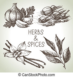 Kitchen herbs and spices Hand drawn sketch design elements