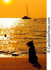 Dog on beach looking sunset