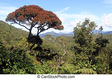 Rhododendron tree - Lonely rhododendron tree in the Horton...