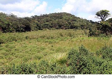 Horton plains - In the Horton plains national park, Sri...