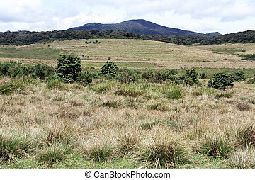 Horton plains - View in the Horton plains national park, Sri...