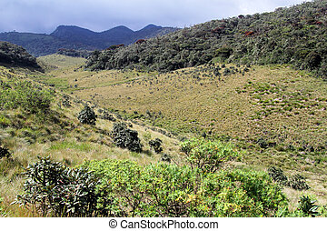 Ravine in Horton plains - View of ravine in the Horton...