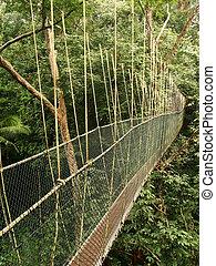 Canopy walkway, Taman Negara National Park, Malaysia