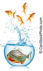 Corre, piraña, pez, oro, lejos