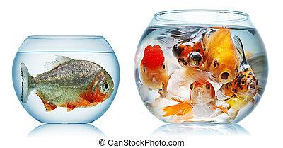 pez, oro, piraña