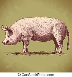 vector illustration of big hog - vector illustration of...