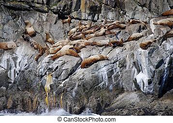 Seals In Alaska - Seals sunning on a cliff in Alaska