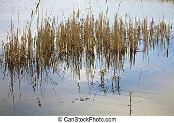 thicket reflecting in the surface of a pond