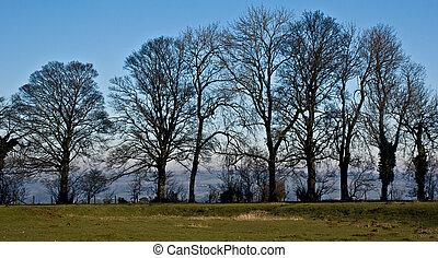 Treeline - Silhouette of leafless trees