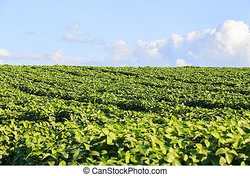 Green field, blue sky