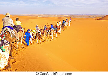 Camel caravan going through the sand dunes in the Sahara...