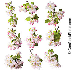 Spring blossoms on white background - Collection of spring...