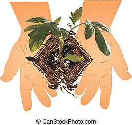 New Beginnings.. - small hands holding a seedling.. ready to...