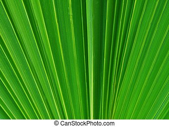 F?CHER%u2026 - Close up of part of a green palm leaf