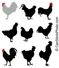 roosters and hens - Black silhouettes of roosters and hens,...