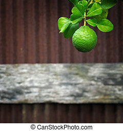 bergamot - Bergamot on the tree ground against a backdrop of...