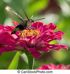Red chrysanthemum Focus on flowers with butterfly, Natural...