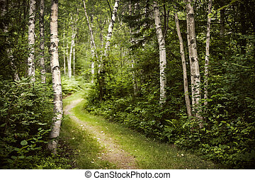 Path in green summer forest - Hiking trail in lush green...
