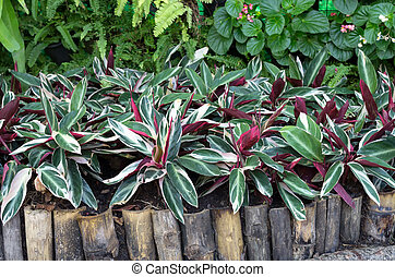 plant - Plants with beautiful leaves Ornamental plant in the...