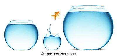 goldfish jumping out of the water - A goldfish jumping out...